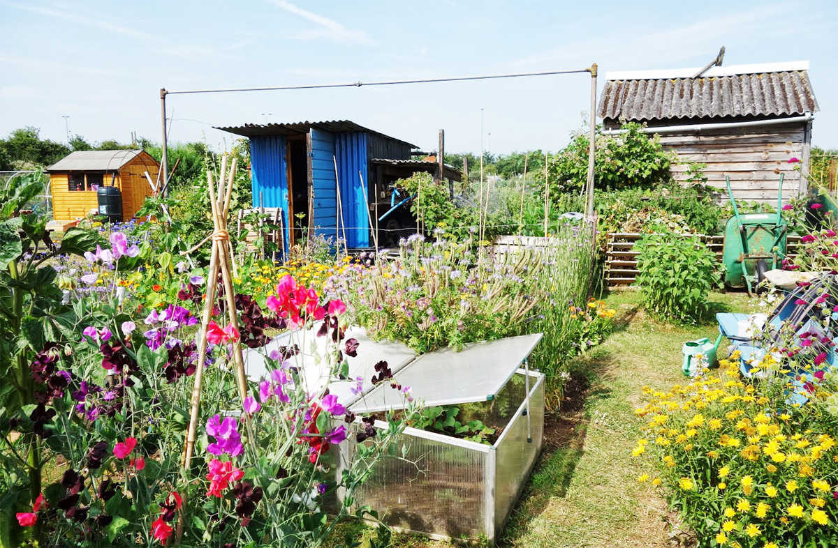 Hyndburn allotment fury over changes to the conditions