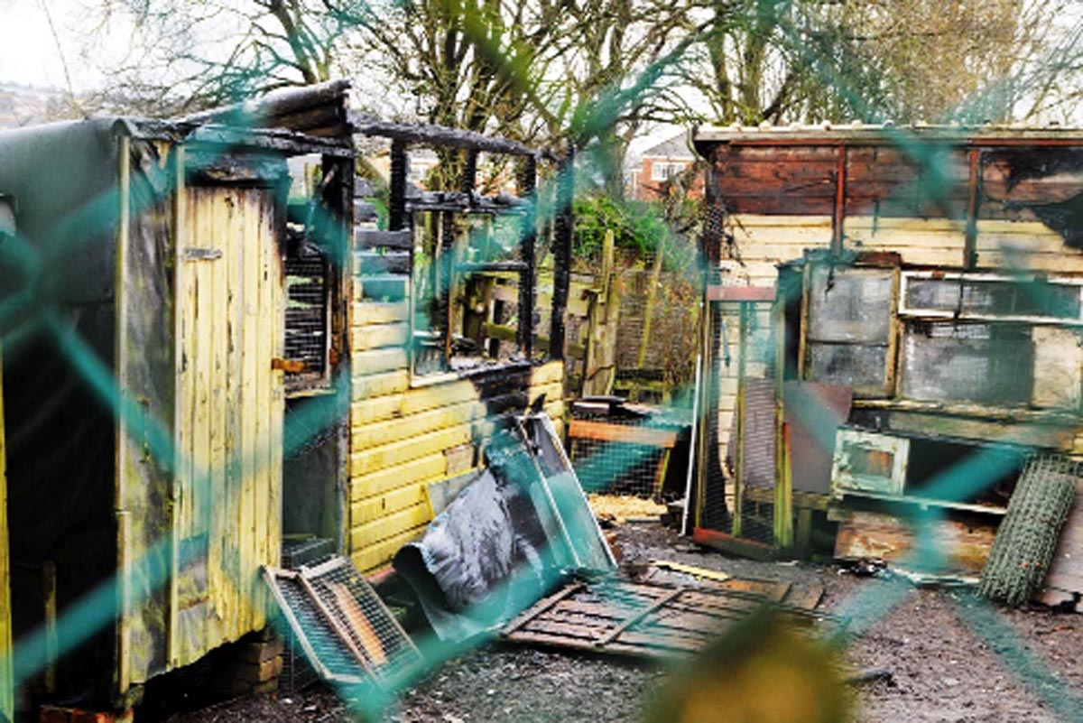 The wreckage of the shed at the allotment near Phillips Road