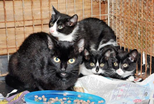The stray cat and three kittens taken in by Eunice Faulkner