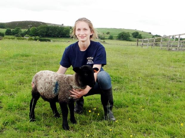 Blackburn Citizen: 'Gruesome' East Lancs sheep attacks condemned by farmers
