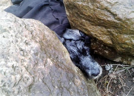Pet spaniel gets head trapped in boulders at Blackburn park